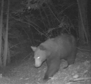 A bear sighting which stirred a lot of excitement.
