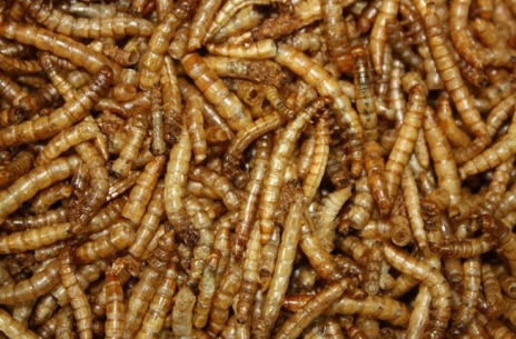 FreezeDriedMealworms