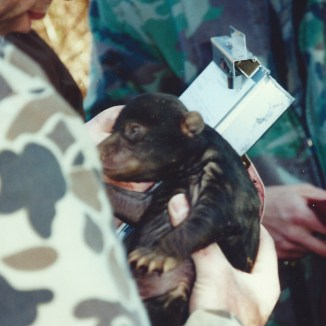 One of the cubs being weighed and measured.