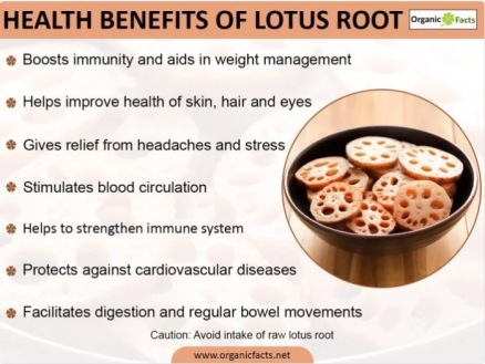 Lotus root health benefits
