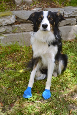 PAWS dog boots