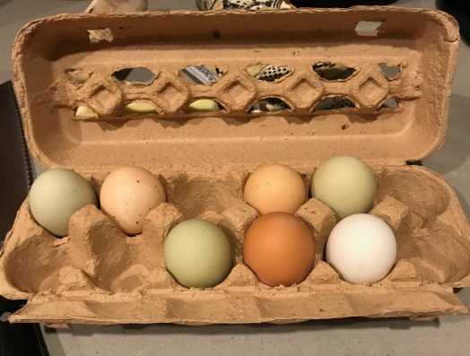Sandy'sEggs Jan2019.jpg