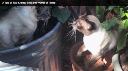 A tale of two kitties screen shot
