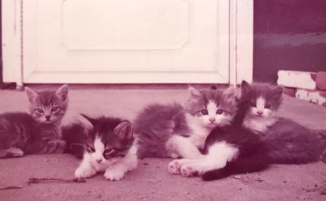 Kaboodles kittens