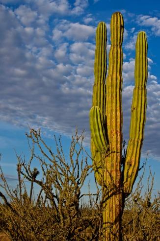 Jared cactus3