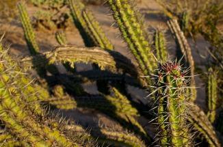 Jared cactus4